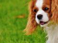 A társasház, a Házirend és a kutyák