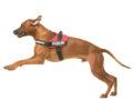 Terápiás kutyák az egészségügyi intézményekben