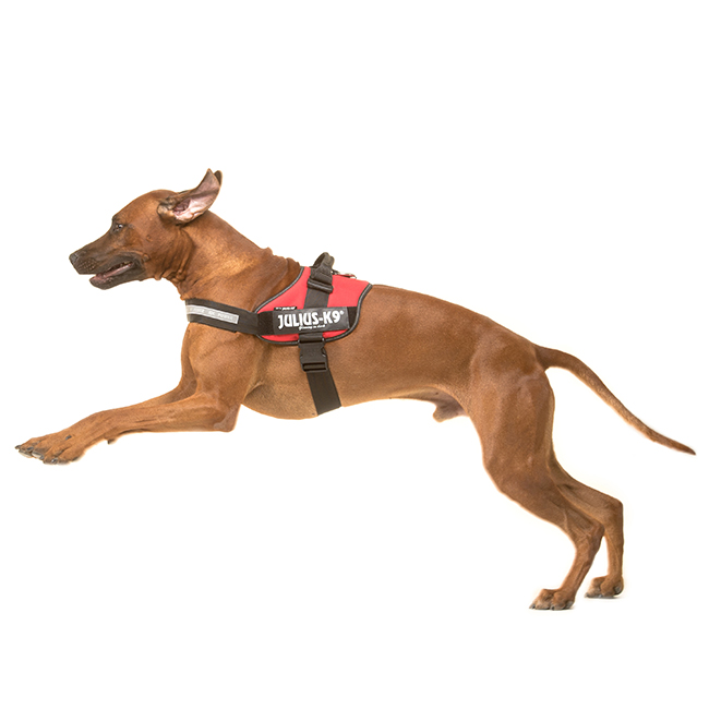Julius-K9 kutyahám