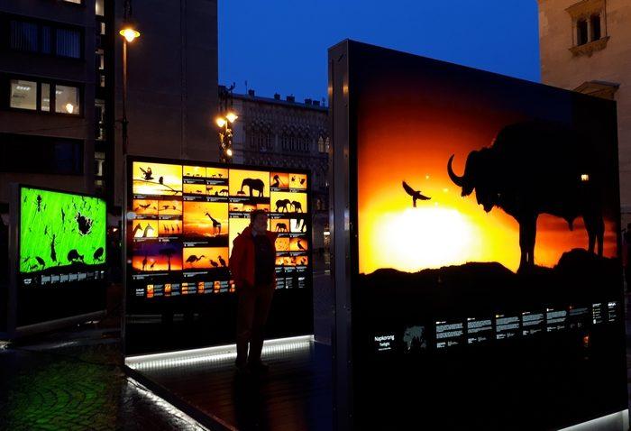 Máté Bence természetfotós kiállítása