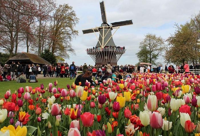 Hollandia - Keukenhofi tulipánok